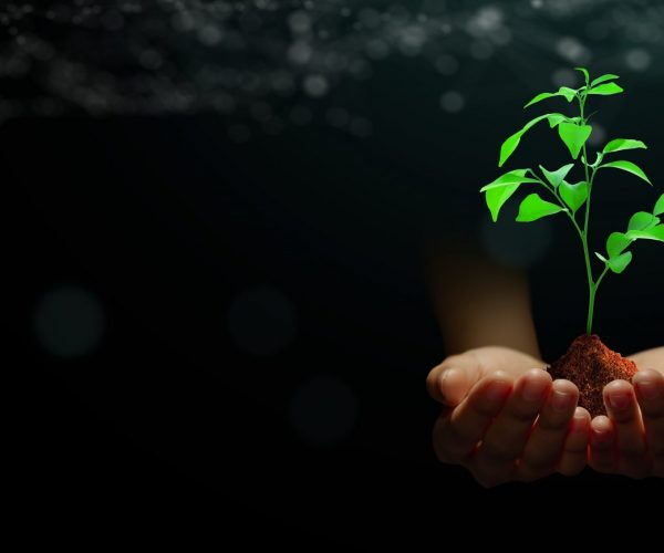 Hand holding young plant with soil on abstract green background with technology wireframe. Nature technology, Ethics, Saving environment, Ecology, Eco earth day Concept.